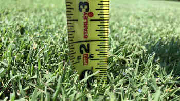 How Long Does Grass Take to Grow? (Different Types)
